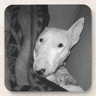 Englischer Bullterrier Snuggled unter einer Decke Untersetzer