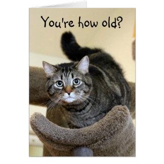 Entsetzte Katzen-Geburtstags-Wünsche Karte