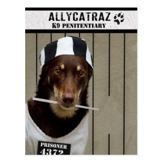 Entweichen von Allycatraz Postkarte