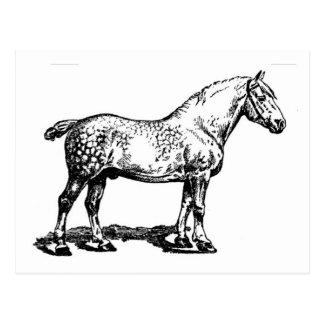 Entwurfs-Pferd -- Dappled Postkarte