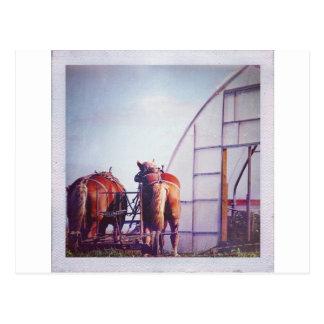 Entwurfs-Pferde bereit zur Arbeit Postkarte