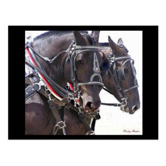 Entwurfs-Pferdepostkarte #1 Postkarte