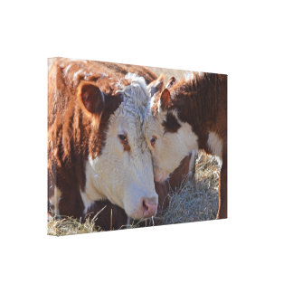 Entzückende knuddelige Kühe Leinwanddruck