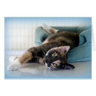 Entzückende Tortie Katze, die Sie anstarrt Karte