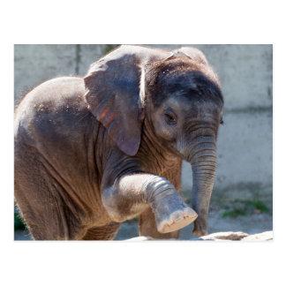 Entzückender Baby-Elefant Postkarte