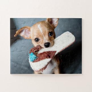 Entzückender Chihuahua-Welpe