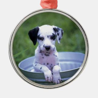 Entzückender dalmatinischer Welpe wartete ein Bad Silbernes Ornament