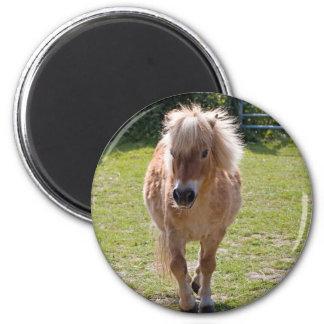 Entzückender die Shetlandinseln-Ponymagnet, Runder Magnet 5,7 Cm