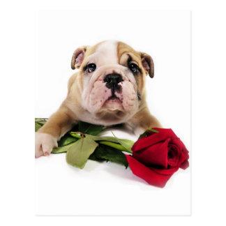 Entzückendes Brown und weiße Bulldogge mit roter Postkarte