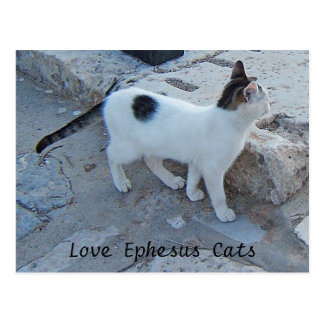 Ephesus Katzen-Postkarte Postkarten