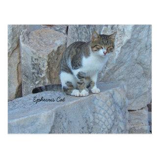 Ephesus wilde Katzen-Postkarte Postkarten