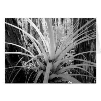 Epiphytic Tillandsia sind im Florida allgemein, Karte