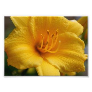 Épreuve photographique 5x7 jaune d Elegent