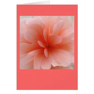 Erblassen Sie - rosa Begonien-Geschenk-Strecke Karte