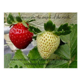 Erdbeerpostkarte Postkarte