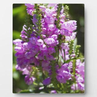 Ergebene Blume oder Drache-Blume Fotoplatte