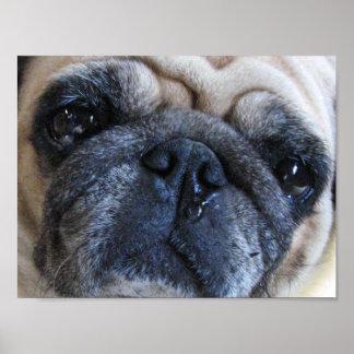 Erhalten Sie wohlen bald kranken Mops-Hund Poster