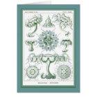 Ernst Haeckel - Kuntsformen der Natur - Tafel 18 Karte