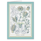Ernst Haeckel - Kuntsformen der Natur - Tafel 27 Karte
