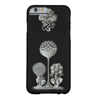 ERNST HAECKEL: Mycetozoa iPhone 6 Fall Barely There iPhone 6 Hülle
