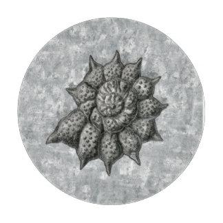 Ernst Haeckel Radiolaria-Muschel 1