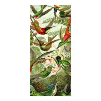 Ernst Haeckeltrochilidae-Kolibri Werbekarte