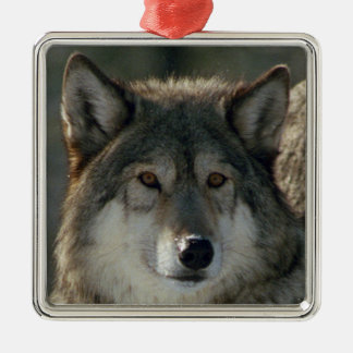 "Erstklassige quadratische Verzierung ""Lamar-Alpha Quadratisches Silberfarbenes Ornament"