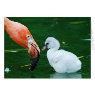 Erwachsene Flamingo-und Küken Gruß-Karte Grußkarte
