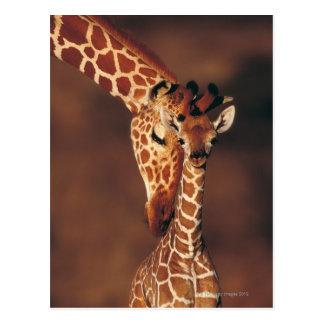 Erwachsene Giraffe mit Kalb (Giraffa Postkarte