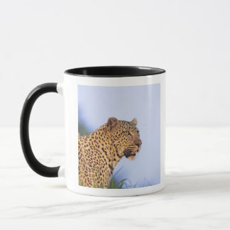 Erwachsener Mannesleopard (Panthera pardus) Tasse