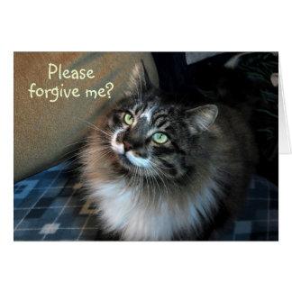 Es tut mir leid unwiderstehliche Katze Zorro Karte