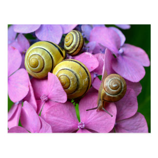 Escargots de jardin sur les fleurs roses carte postale