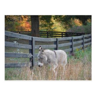 Esel auf einem Herbst-Gebiet Postkarte