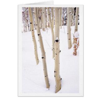 Espen im Schnee, Tellurid Co Grußkarte