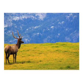 Estes Park Colorado Postkarte
