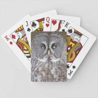 Eulennahaufnahme des großen Graus, Kanada Spielkarten