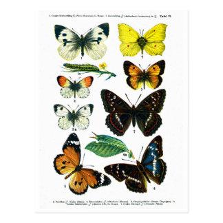 Europäische Postkarte der Drosselklappe-II