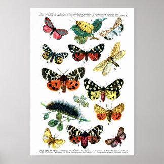 Europäische Schmetterlinge Poster