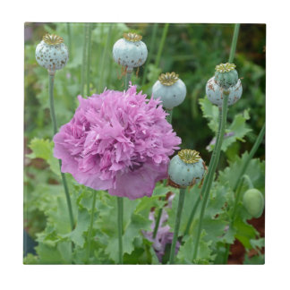 Extravagante lila Mohnblumen-Blumen Fliese