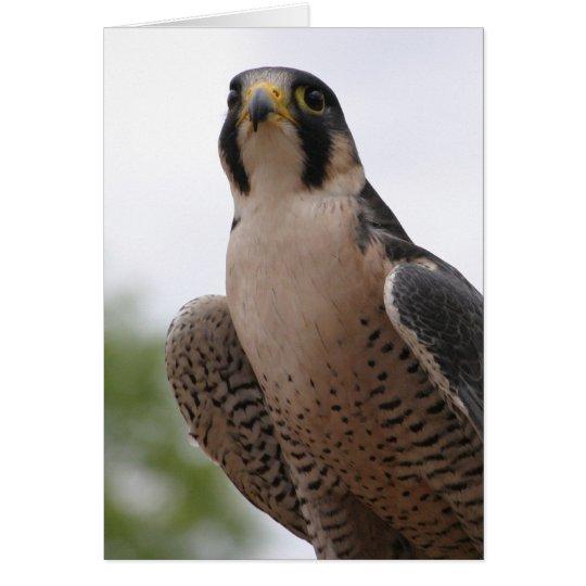 Falke Grußkarte