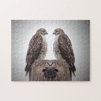 Falken auf einem Posten