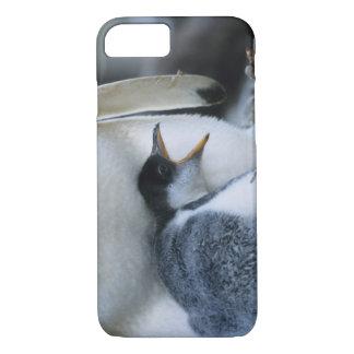 Falklandinseln. Gentoo Pinguinküken nahe bei iPhone 8/7 Hülle