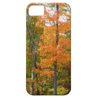 Fall-Ahornbaum-Herbst-Natur-Fotografie iPhone 5 Schutzhüllen