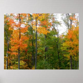 Fall-Ahornbaum-Herbst-Natur-Fotografie Poster