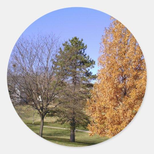 Fall-Bäume Runder Aufkleber