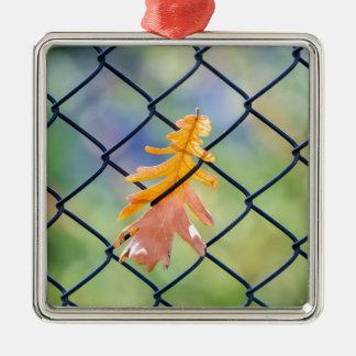 Fall-Blatt gefangen auf einem Zaun Silbernes Ornament