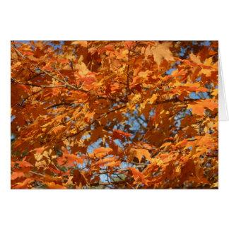 Fall in Connecticut!! Karte
