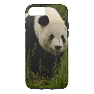 Familie des Panda-(Ailuropoda melanoleuca): iPhone 8/7 Hülle