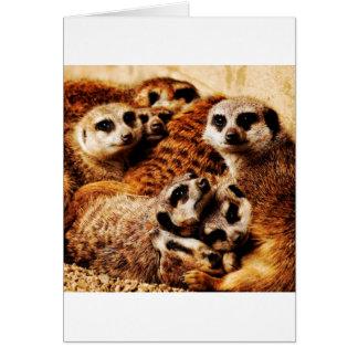 Familie von Meerkats Karte