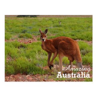 Fantastische Australien-Postkarte Postkarte